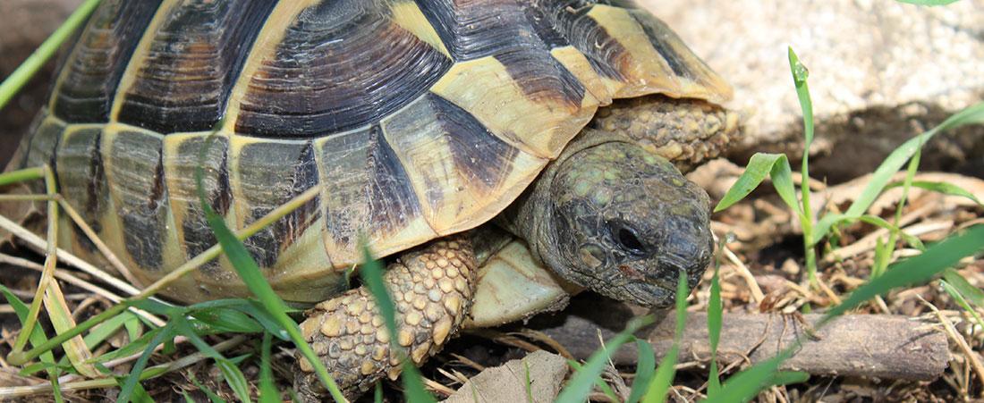 tortue-gite-barnas-vals-les-bains
